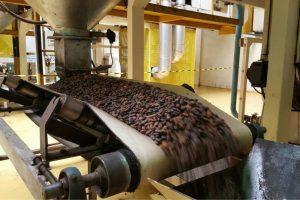 La lavorazione dei semi di cacao