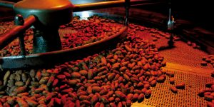 La torrefazione del cacao